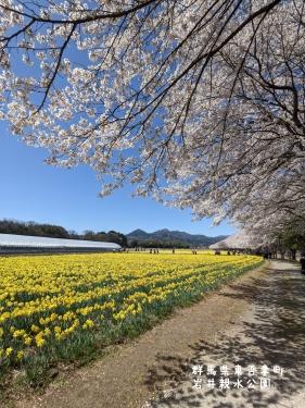 20210407群馬県東吾妻町、岩井親水公園7