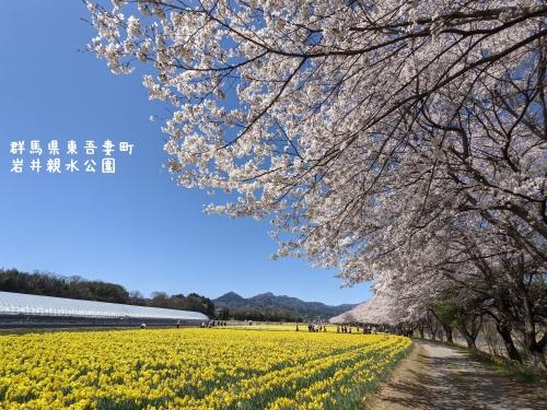 20210407群馬県東吾妻町、岩井親水公園8