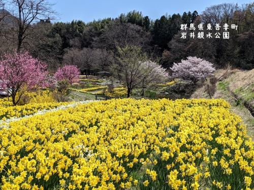 20210407群馬県東吾妻町、岩井親水公園9