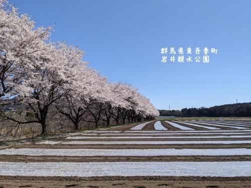20210407群馬県東吾妻町、岩井親水公園11