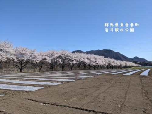 20210407群馬県東吾妻町、岩井親水公園13