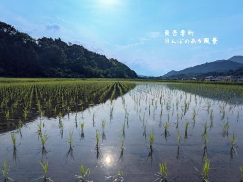 20210602群馬県東吾妻町、田んぼのある風景2