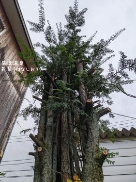 20210912草津温泉カフェ花栞(はなしおり)木の枝伐採1