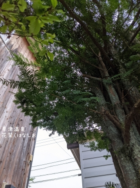 20210912草津温泉カフェ花栞(はなしおり)木の枝伐採2
