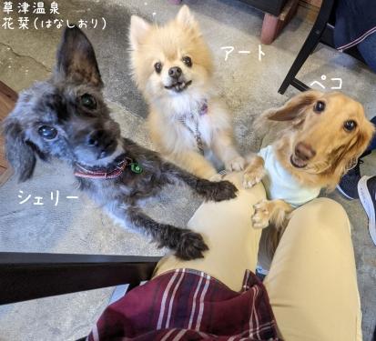 20210904草津温泉カフェ花栞(はなしおり)保護犬