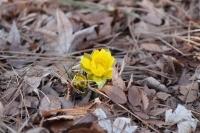 春の訪れ10