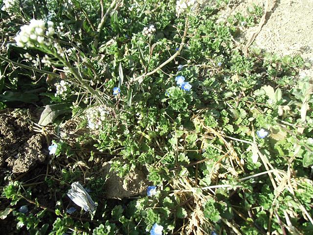 春の草花たち