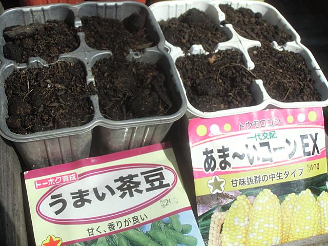 豆の種まき