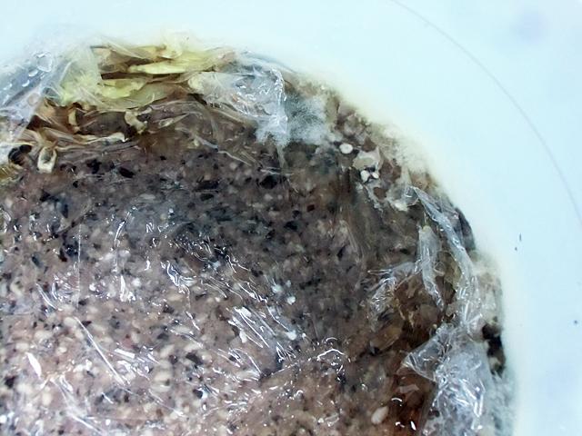 黒豆味噌の状態