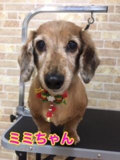 12月18日ミミちゃん