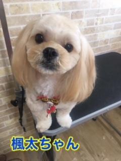 12月19日楓太ちゃん