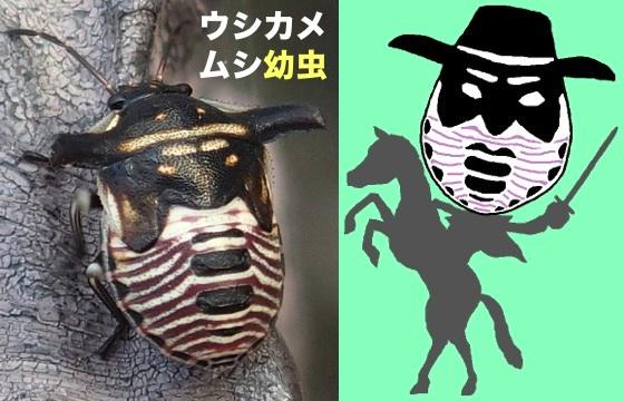 02ウシカメムシ幼虫仮面