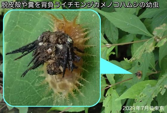 10一文字亀子葉虫A