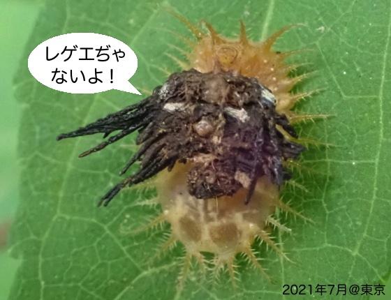 11一文字亀子葉虫B