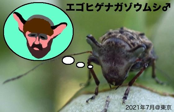 03空目エゴ髭長象虫♂