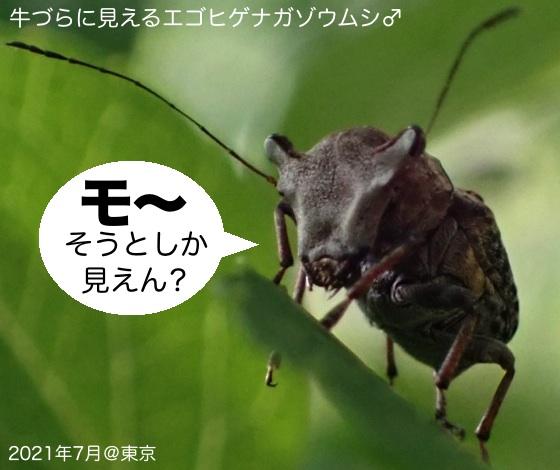 07エゴ髭長象虫♂牛面