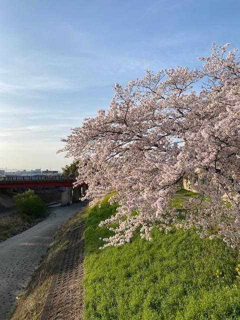 桜と一文橋