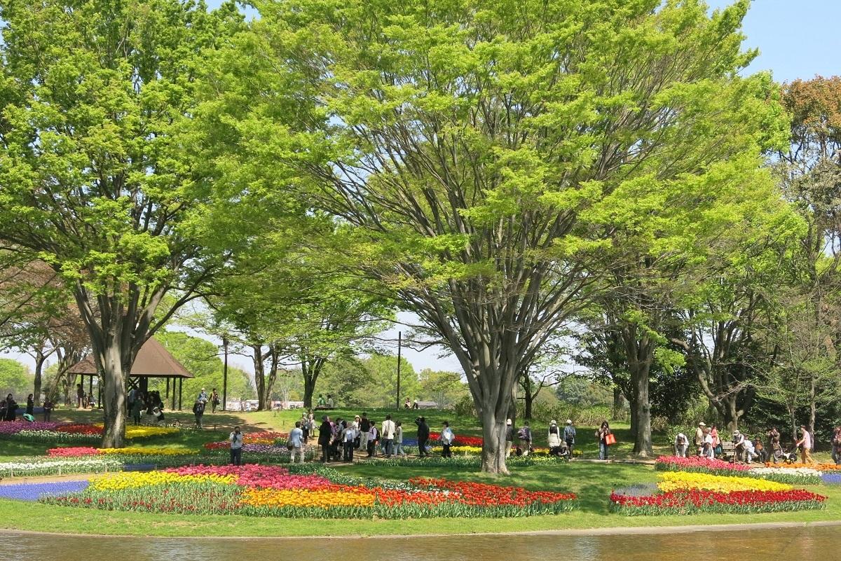 昭和記念公園2014040501