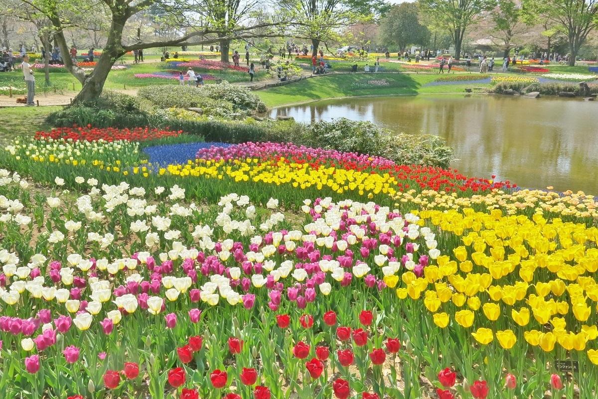 昭和記念公園2014040502