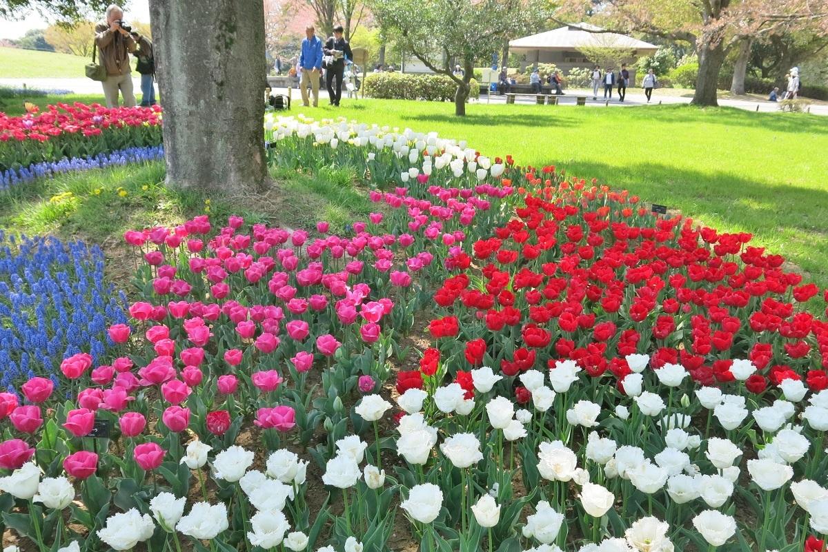 昭和記念公園2014040503