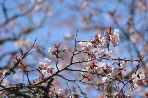 21-04-03-04.jpg