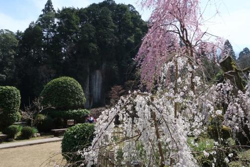 2021-3 宇陀桜 (103)