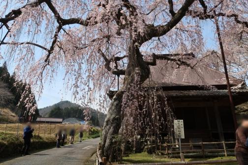 2021-3 宇陀桜 (139)