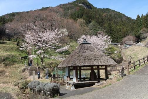 2021-3 宇陀桜 (144)