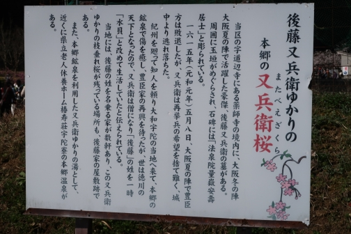 2021-3 宇陀桜 (1)