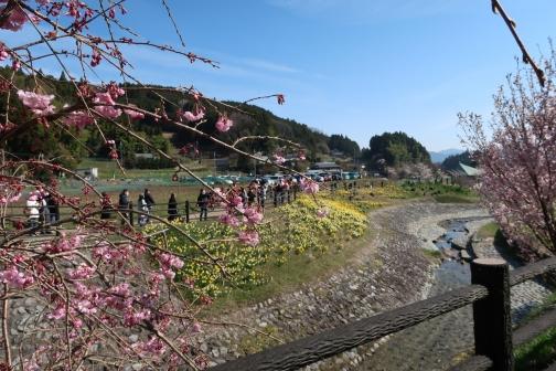 2021-3 宇陀桜 (6)