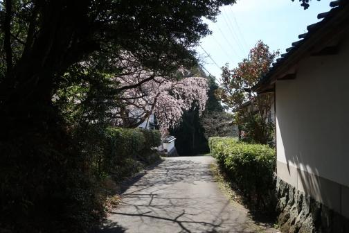 2021-3 宇陀桜 (21)