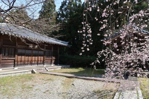 2021-3 宇陀桜 (24)