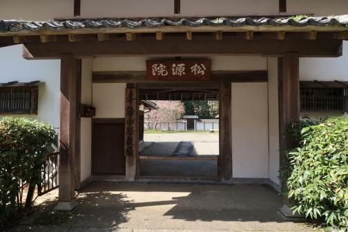 2021-3 宇陀桜 (25)