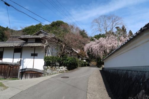 2021-3 宇陀桜 (28)