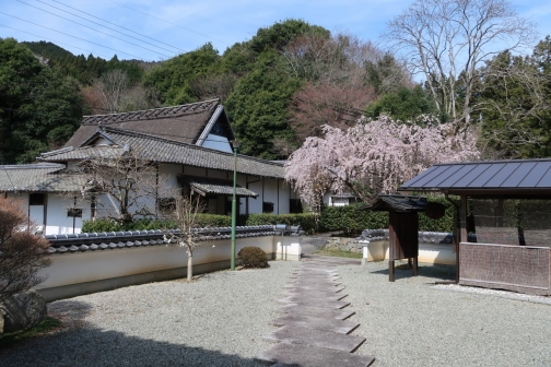 2021-3 宇陀桜 (42)