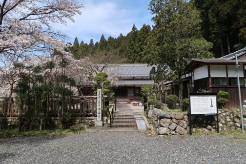 2021-3 宇陀桜 (70)