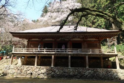 2021-3 宇陀桜 (119)