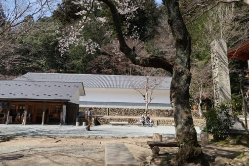 2021-3 宇陀桜 (131)