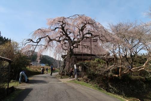 2021-3 宇陀桜 (138)