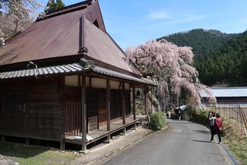 2021-3 宇陀桜 (135)