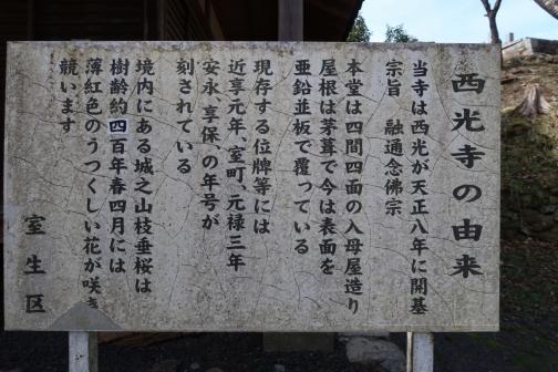 2021-3 宇陀桜 (140)