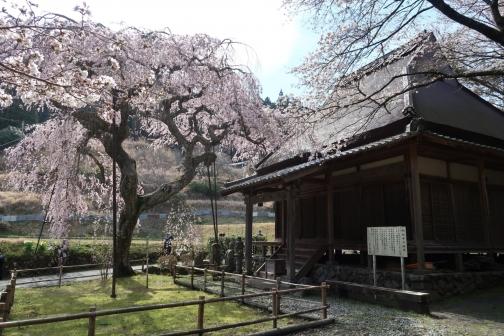 2021-3 宇陀桜 (141)