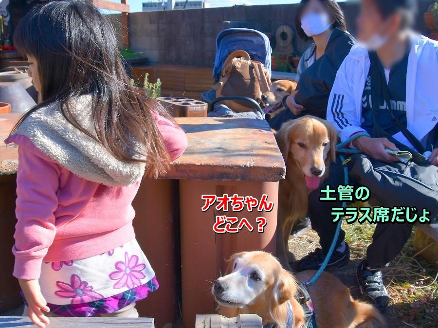 DSC_3104ワンコオッケ♪