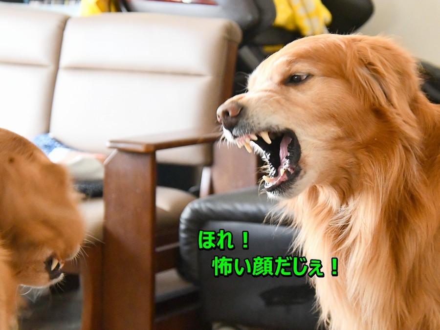 DSC_3902ほれ!怖い顔!