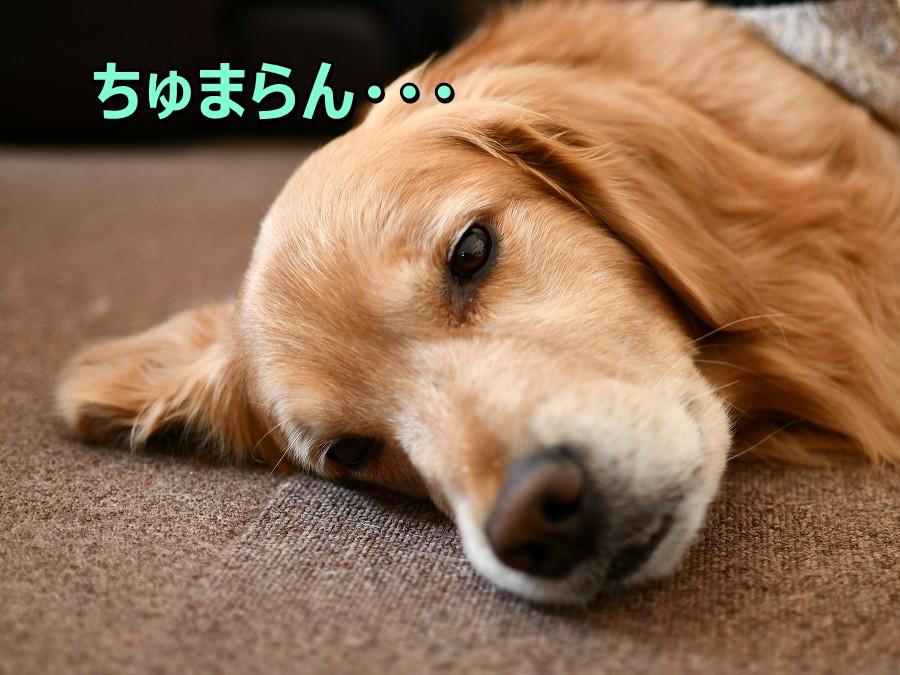 DSC_4173ちゅまらん