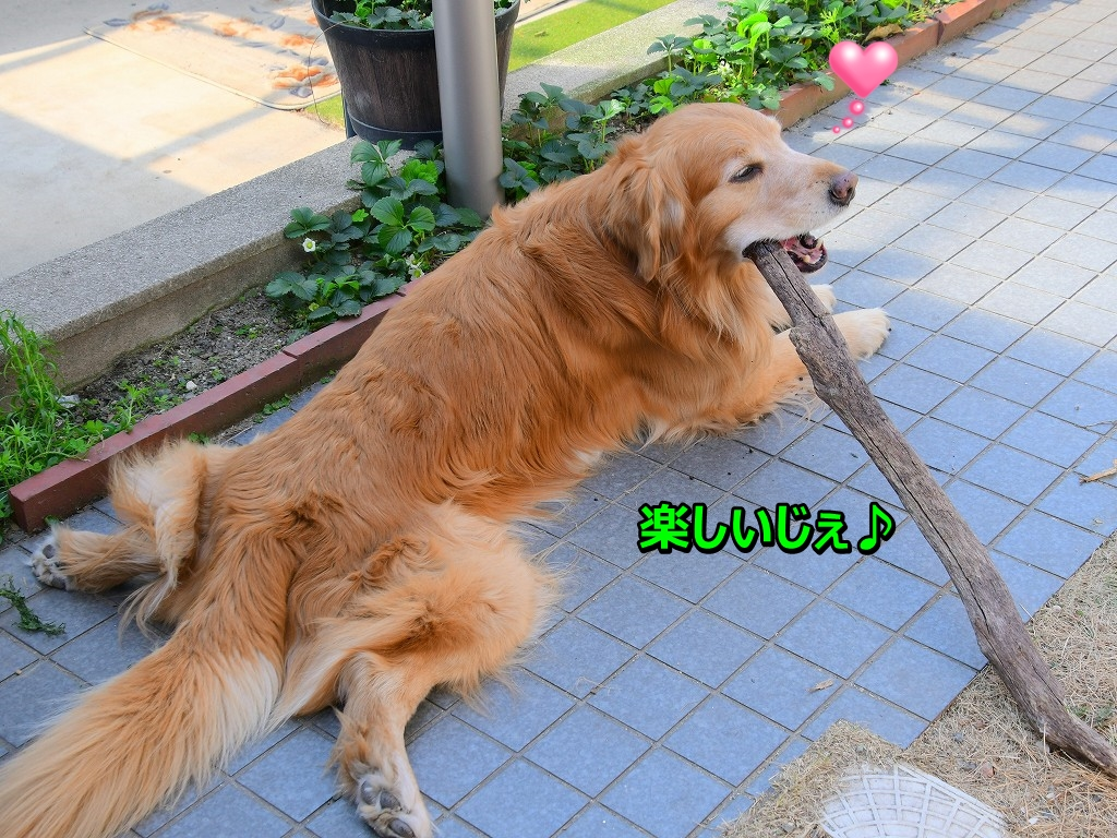 DSC_4446単純サスゴン