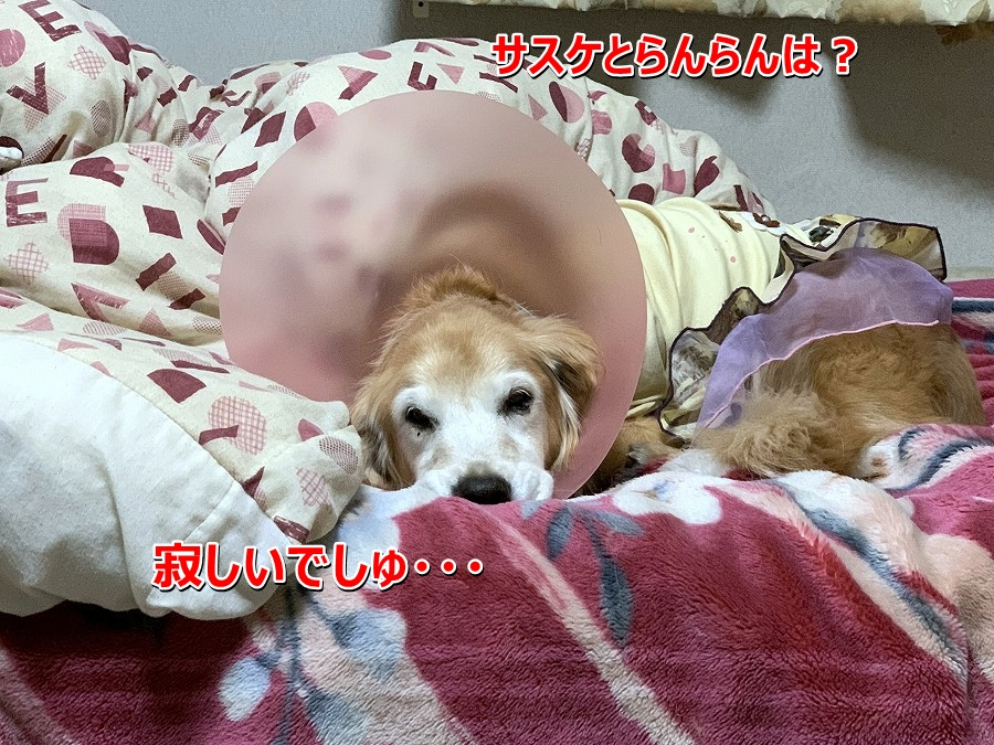 S__9961479.jpg