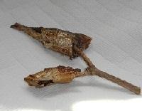 鰯の頭と柊の枝7