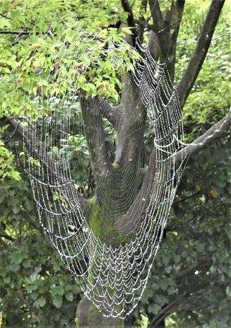 31蜘蛛の糸 (2)