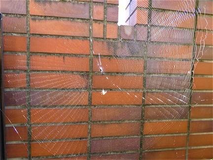 蜘蛛の糸.
